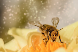Pylové alergie