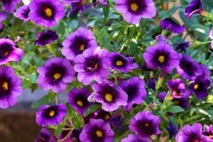 Okrasná zahrada červenec